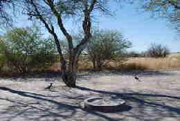 Picture (c) BeeTee - Central Kalahari