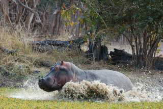 Pictures (c) BeeTee - Sambia - Buffalo Camp - North Luangwa National Park - Walking Safari
