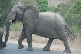 Pictures (c) BeeTee - South Afrika - Kruger National Park - Balule Camp - Nelspruit