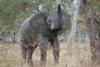 Pictures (c) BeeTee - Sambia - South Luangwa National Park - Nsefu Sektor