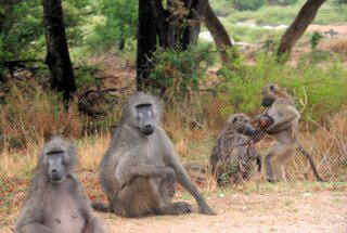 Pictures (c) BeeTee - South Africa - Kruger National Park - Skukuza - Lower Sabie