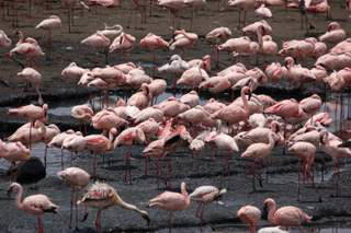 Pictures (c) BeeTee - Tansania - Arusha National Park - Flamingos