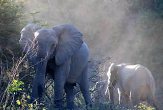 Picture (c) BeeTee - Sambia - Lower Sambesi National Park