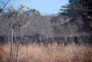 Pictures (c) BeeTee - Sambia - Kafue National Park