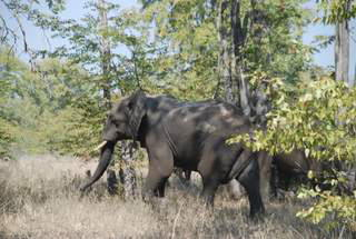Pictures (c) BeeTee - Malawi - Liwonde National Park