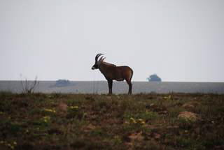 Pictures (c) BeeTee - Malawi - Nyika Plateau - Roan Antilope