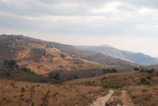 Pictures (c) BeeTee - Malawi - Nyika Plateau