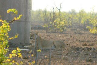 Picture (c) BeeTee - South Africa - Kruger National Park - Tsendze Camp - Mopani Camp