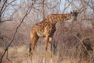 Pictures (c) BeeTee - Tansania - Ruaha National Park